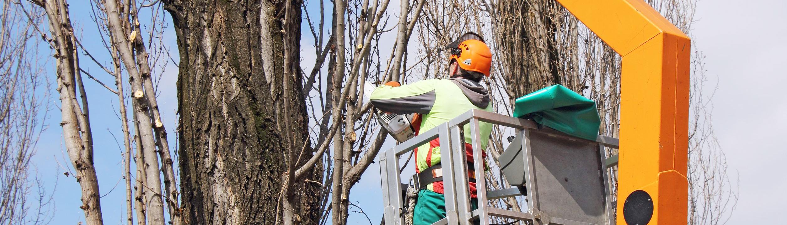 header przycinka drzew