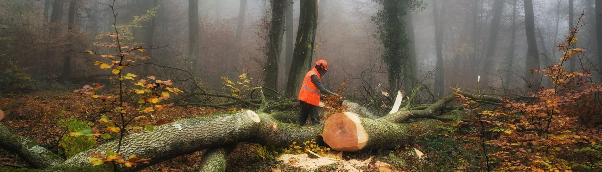 header wycinka drzew