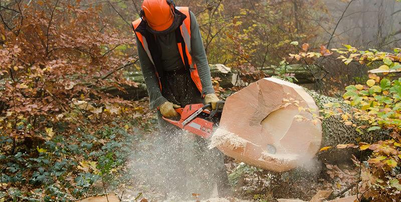 pracownik leśny obcina pień ściętego drzewa