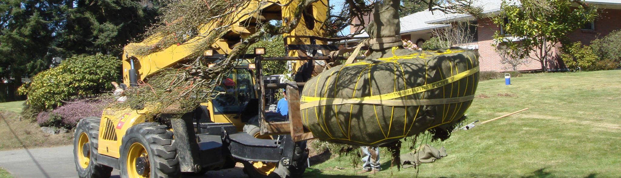 transport drzewa do przesadzenia