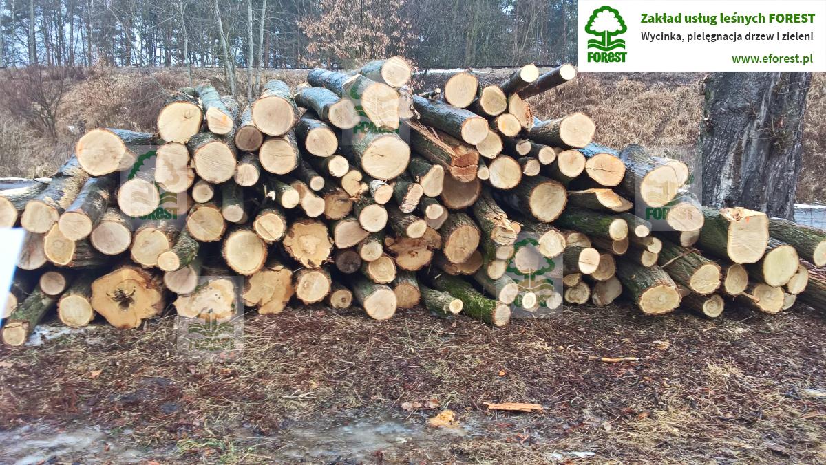 drewno ułożone w stos przygotowane do wywiezienia