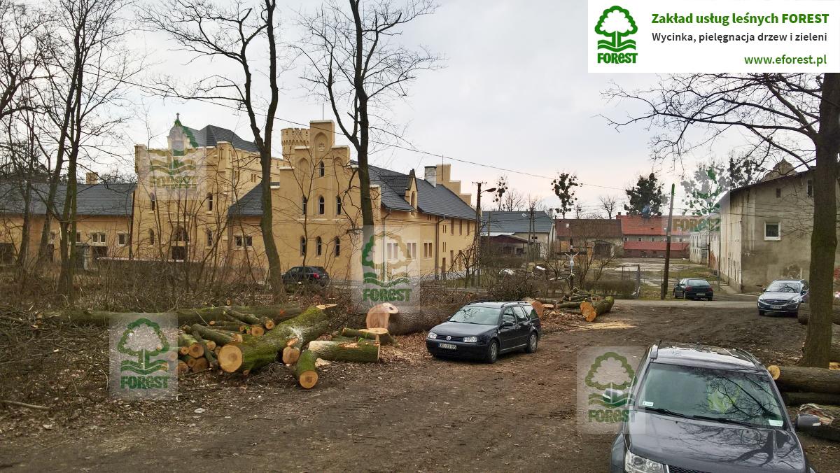 Drzewa wycięte w zabytkowym parku Zamku Kopice obok Grodkowa na opolszczyźnie