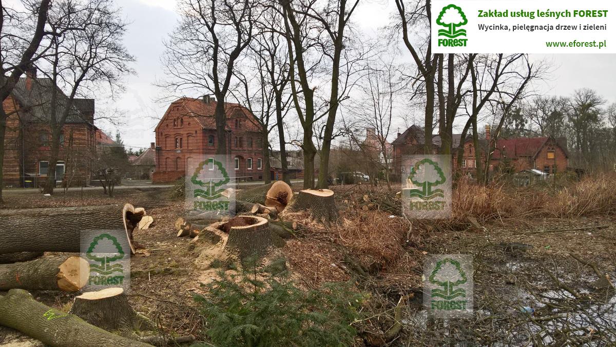 Grodków Zamek Kopice konserwacja drzewostanu w zabytkowym parku