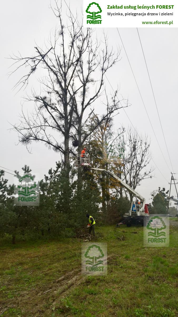 obcinanie gałęzi drzew zagrażających liniom elektroenergetycznym