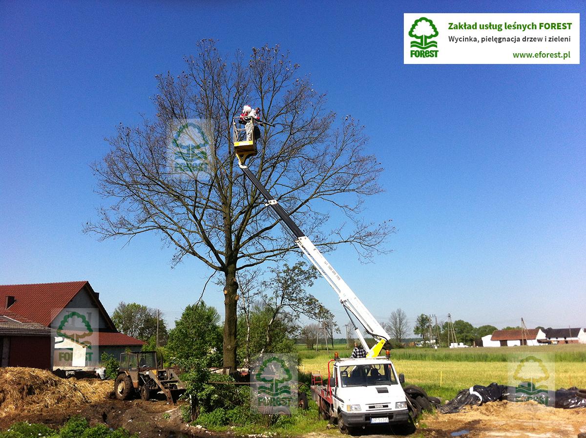 profilaktyczne opryski drzew z podnośnika koszowego