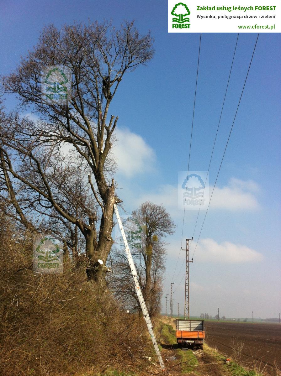 przycinanie gałęzi drzew pod liniami energetycznymi