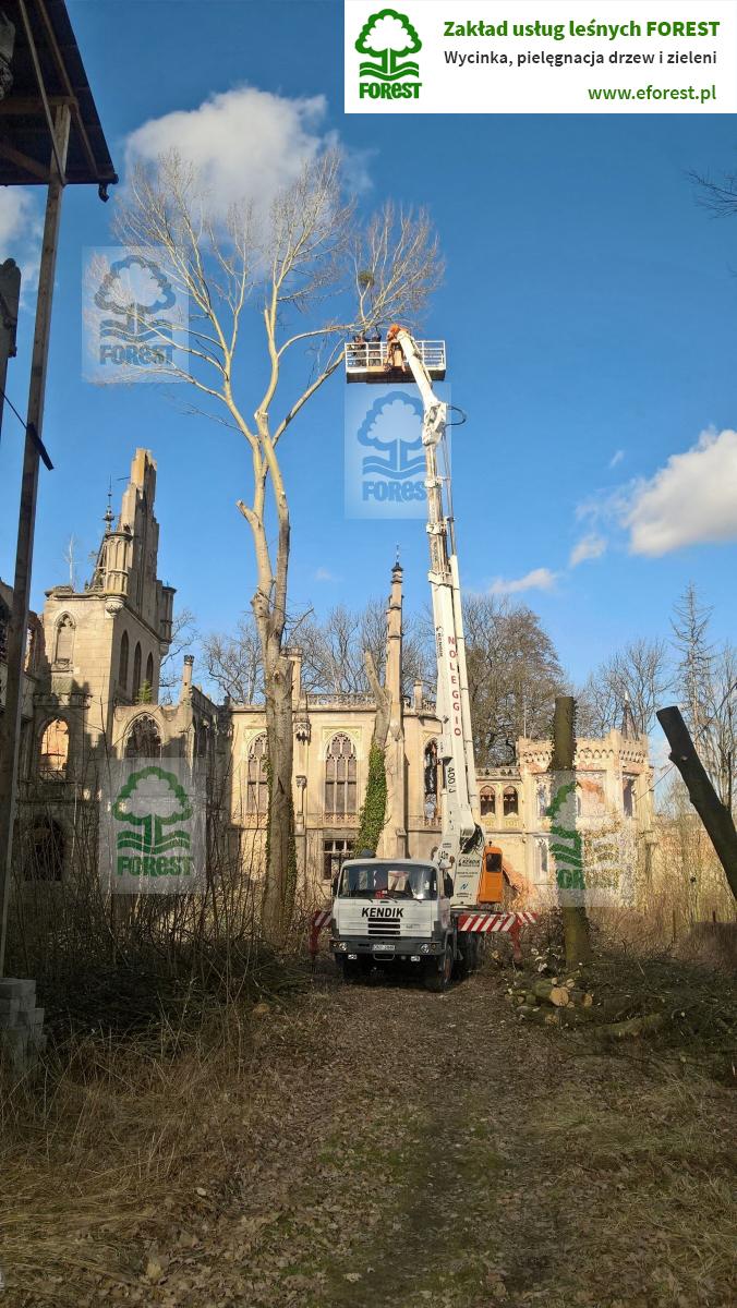 przycinka przew i konserwacja drzewostanu w zabytkowym parku w Kopicach