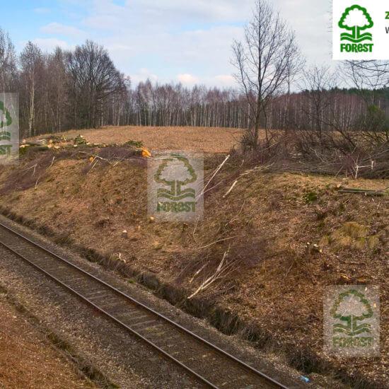 ścięte drzewa i krzewy przy torach kolejowych