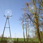Wycinka drzew przy liniach elektroenergetycznych