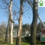 wycinka drzew suchych obumarłych Niemodlin podgórna