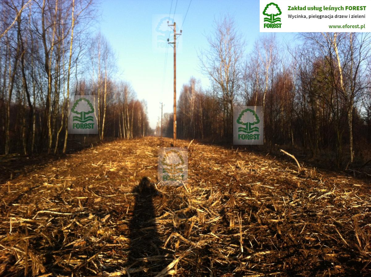 wycinka drzew w bezpośrednim sąsiedztwie linii elektroenergetycznej