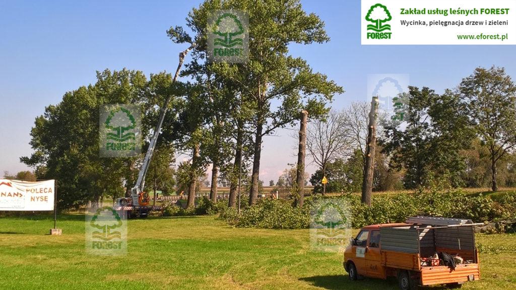 Wycinka drzew w pasie drogowym drogi krajowej DK46 Opole Nysa