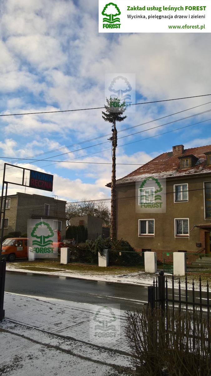 wycinka drzewa zagrażającemu budynkowi w Niemodlinie