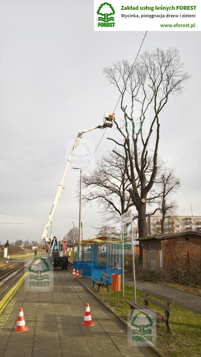 wycinka drzewa zagrażającemu podróżnym na peronie stacji kolejowej