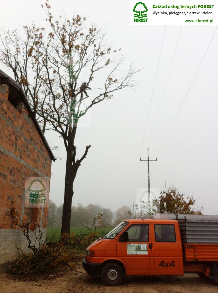 wycinkę drzew zagrażających bezpieczeństwu linii energetycznych