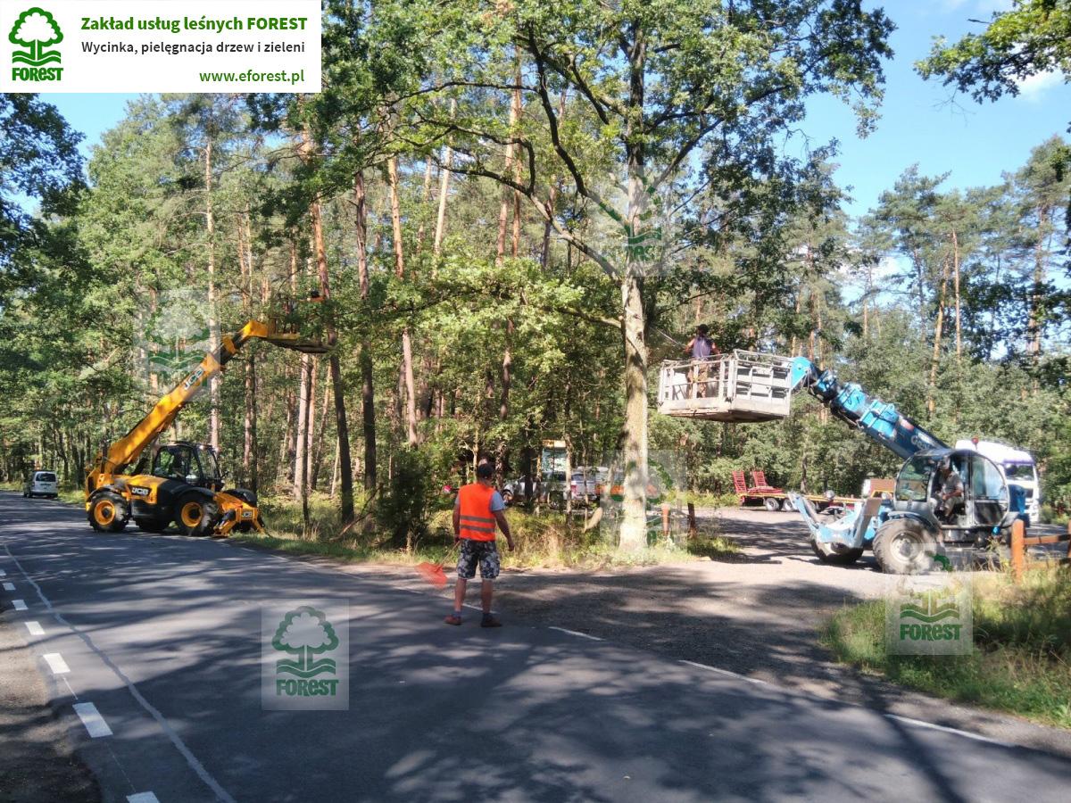 Pielęgnacja drzew w pasie drogowym na trasie Strzelin Wrocław na zlecenie Zarządu Dróg