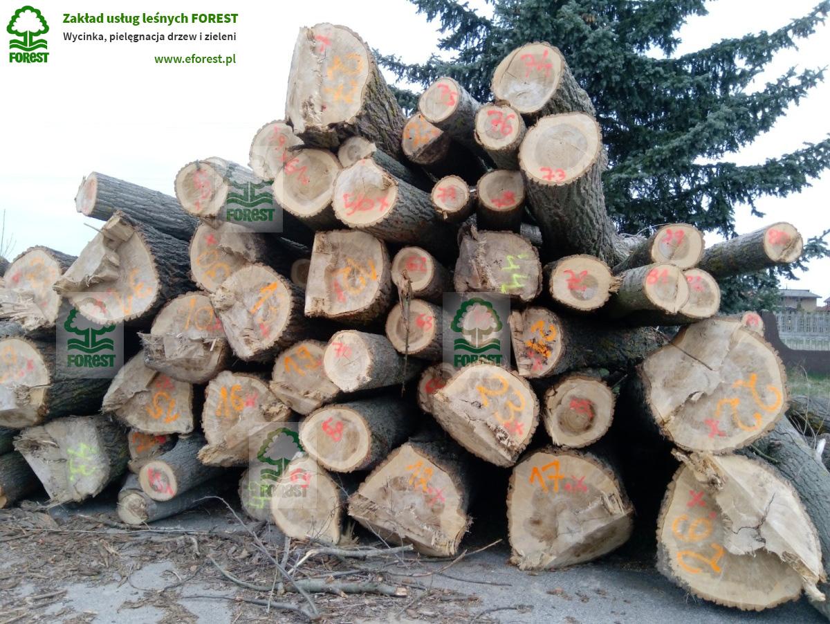 Szacunek brakarski drewna surowca drzewnego przeznaczonego na biomasę