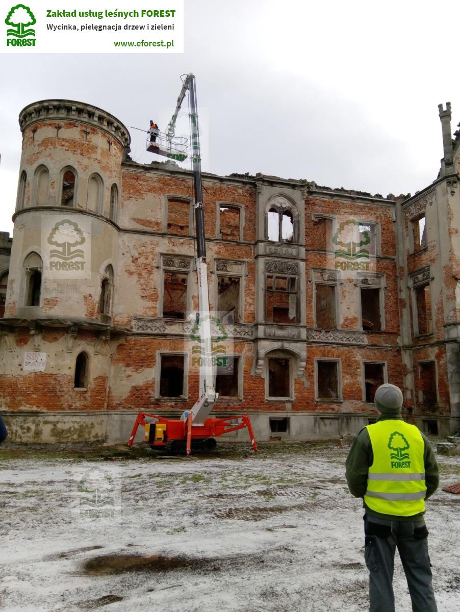 Usuwanie samosiewów Zamek Kopice niedaleko Grodkowa na Opolszczyźnie