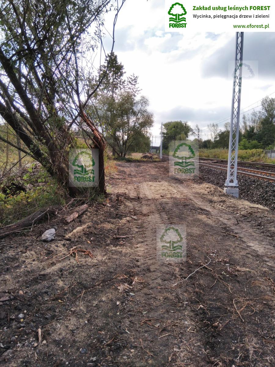 Wycinka drzew i krzewów w obszarze torów linii kolejowej trasy Opole – Katowice