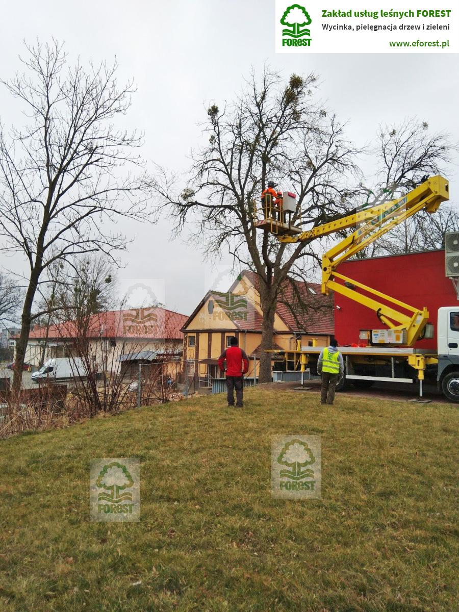 Wycinka drzew przy markecie Biedronka w Katowicach w dzielnicy Murcki