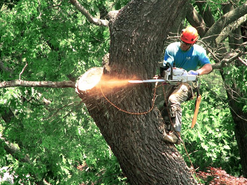 kluczbork wycinka drzew