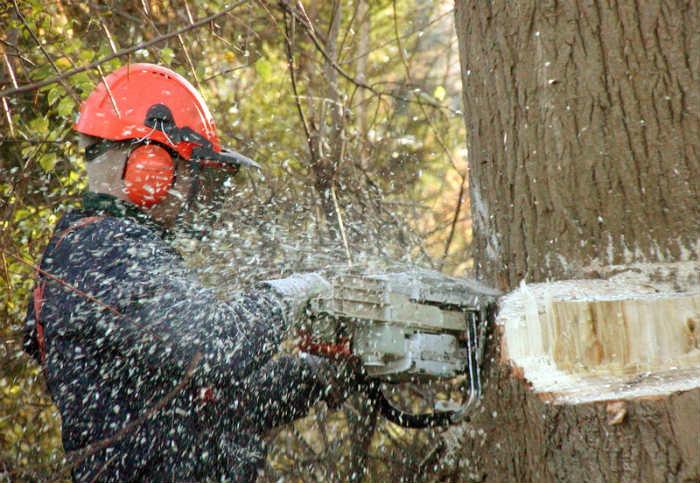 Ząbkowice Śląskie wycinka drzew