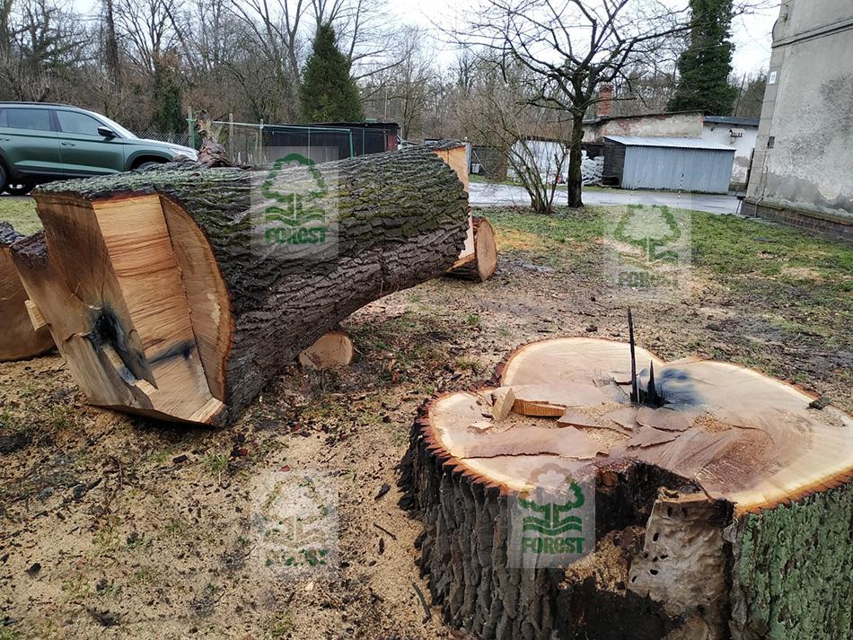 kędzierzyn-koźle wycinka drzew