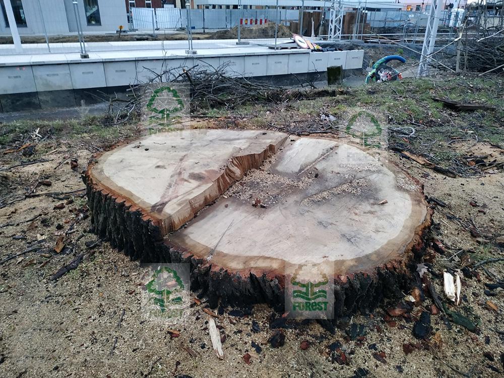 strzelce opolskie wycinka drzew
